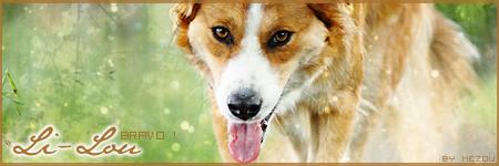 [Résultats] Bannière sur les chiens Li-lou-3f71003