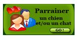 Newsletter Nov 2014 - Les Calendriers 2015 sont en vente... Aidons Sweety à trouver sa famille Bouton-miniature-...arent--2-42aa43b