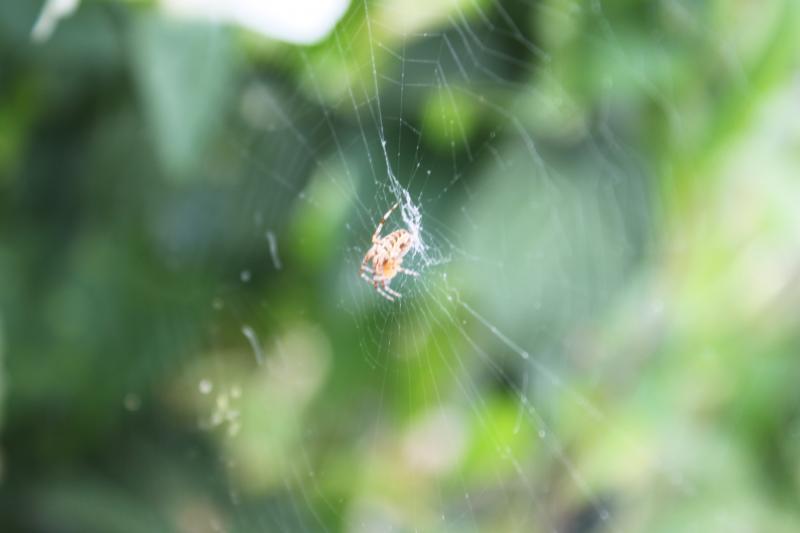 Des araignées Img_2135-1--3fe949e