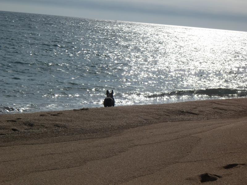 buenas tardes desde la playa-http://img99.xooimage.com/files/7/c/f/sam_1277-40f3e70.jpg