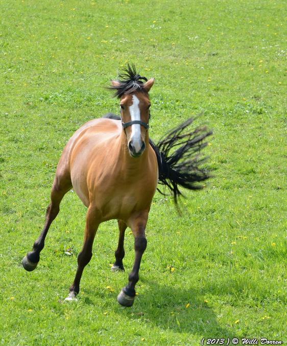 chevaux au pré 2 Dpp_-chevaux--0002-3f69e30