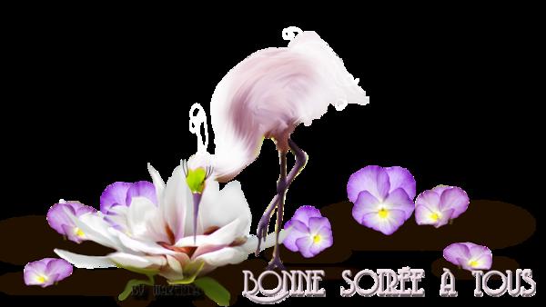 BONNE SOIREE DE SAMEDI F1a26dfb-4206fb6